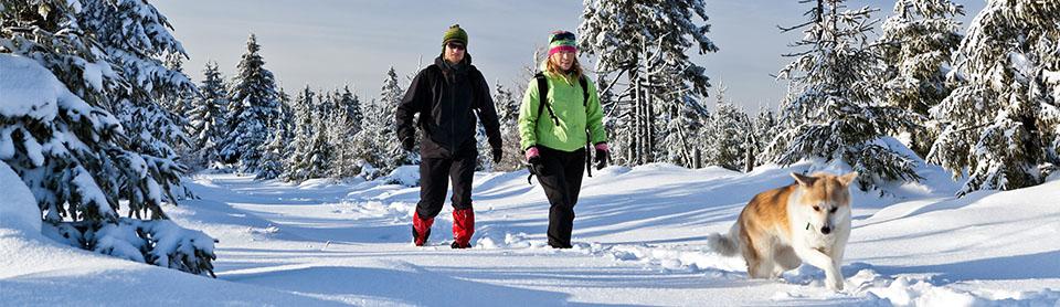 Прогулки с собакой зимой