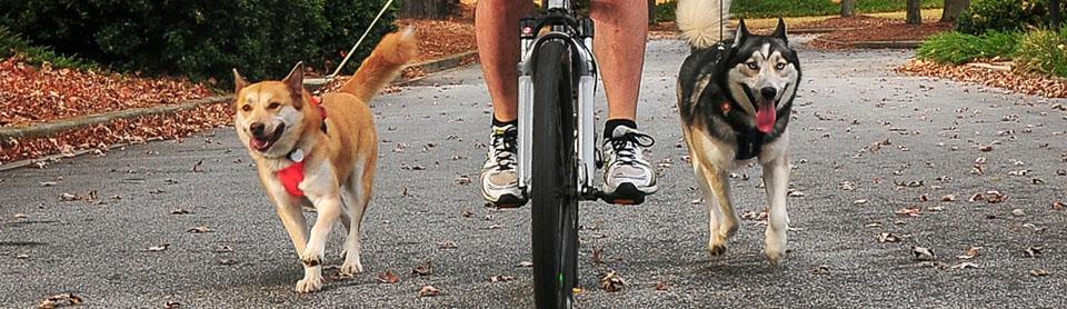 На велосипеде с собакой