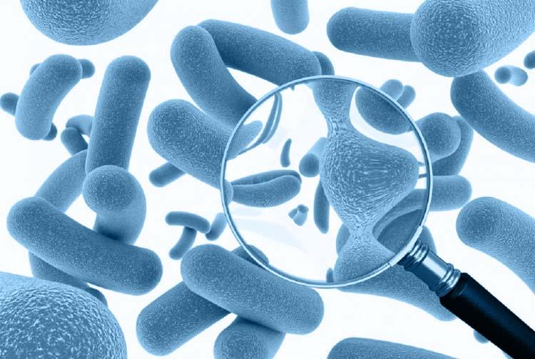 «Субтилис» — пробиотик для собак и кошек