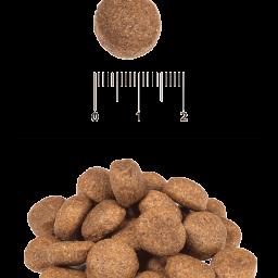 Blitz: сухой корм для взрослых собак крупных и гигантских пород