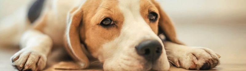 Питание собак и расстройства желудка