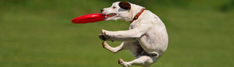 Фрисби для собак