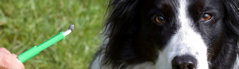 Какие паразиты бывают у собак?