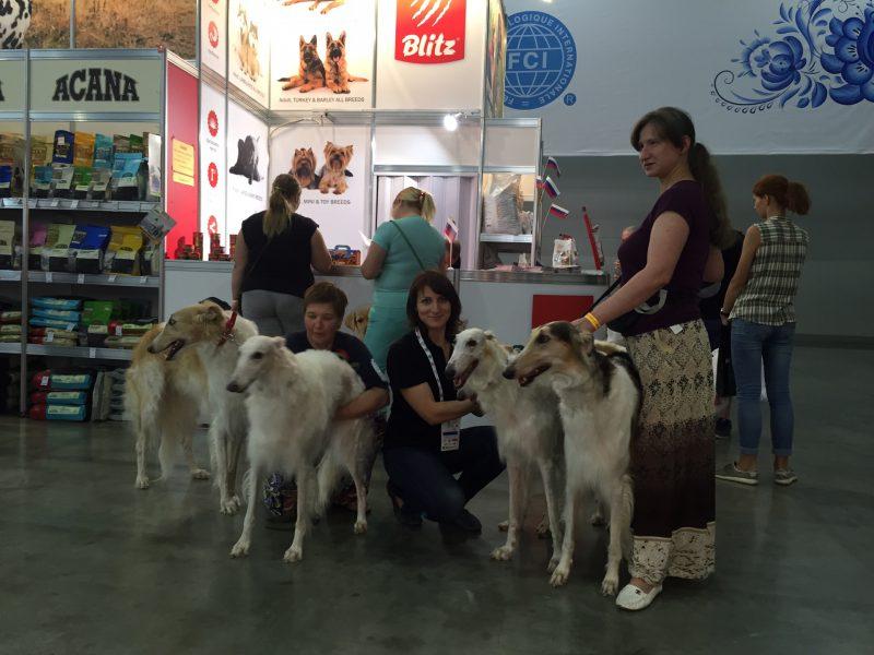 Blitz на Всемирной выставке собак World Dog Show 2016