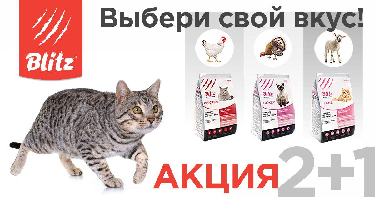 Акция 2 + 1 на корма Blitz для кошек — «Выбери свой вкус»!
