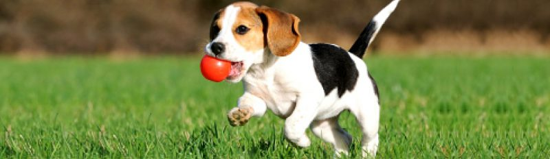 Особый корм Blitz для активных собак