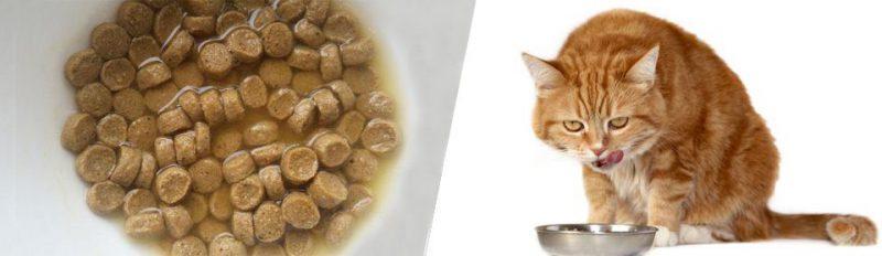 Как правильно размачивать сухой корм?