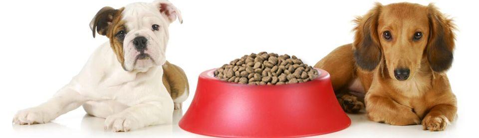 Сколько сухого корма нужно собаке?