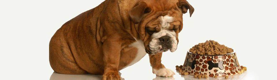 Собака плохо ест сухой корм: что делать?