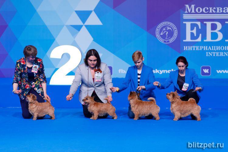 Интернациональная выставка собак «Евразия-2018»