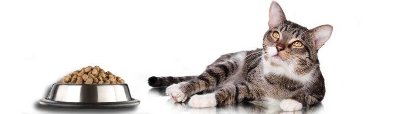 Что делать, если кошка отказывается от сухого корма