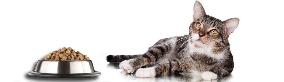 Кошка отказывается от сухого корма