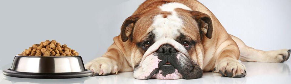Собака отказывается от сухого корма