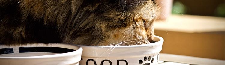 Как правильно кормить кошку сухим кормом?