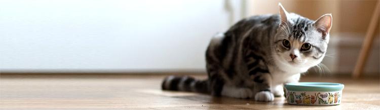Как приучить кошку к сухому корму