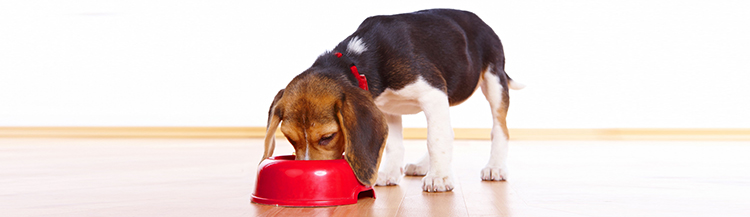 Как приучить щенка к сухому корму
