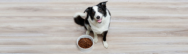 Как приучить собаку к сухому корму?