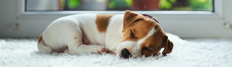 Вы решили завести щенка — что нужно делать?