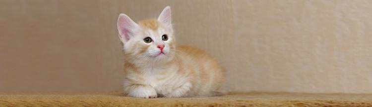 Вы решили завести котёнка — что нужно знать?