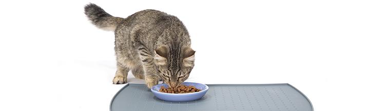 Как отмерить сухой корм для кошек