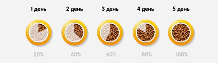 Как правильно перевести кошку на сухой корм