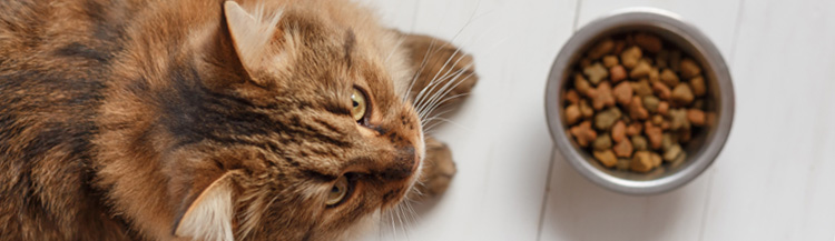 Можно ли кошке давать сухой корм