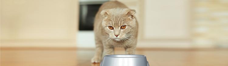 Почему кошка не ест сухой корм?