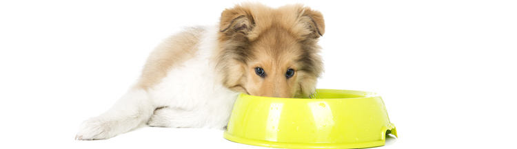 Как кормить щенка в 3 месяца сухим кормом