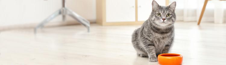 Как перевести кота на сухой корм?