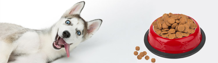 Каким сухим кормом лучше кормить щенка