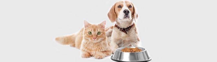 Можно ли сухой корм кошкам и собакам?
