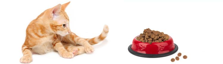 С какого возраста котятам можно сухой корм?