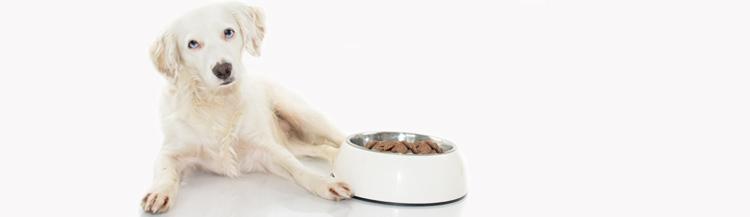 Можно ли давать собакам сухой корм?