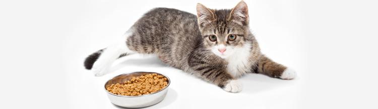 Можно ли кормить котёнка только сухим кормом?