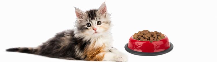 Можно ли котятам сухой корм