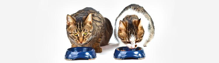Сколько кормить кота сухим кормом в день?