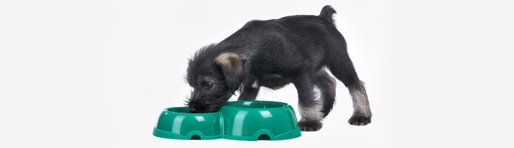 Когда щенку можно давать сухой корм?