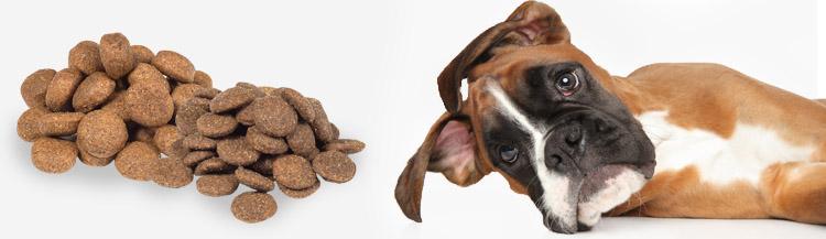 Можно ли смешивать сухие корма для собак