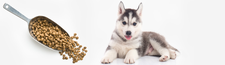 Сколько давать сухого корма щенку в 3 месяца