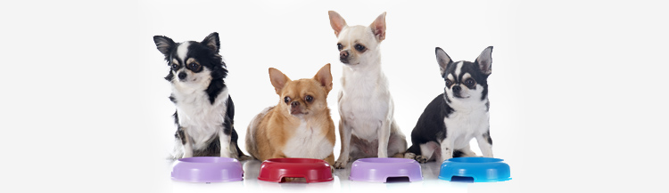Сколько грамм сухого корма давать собаке