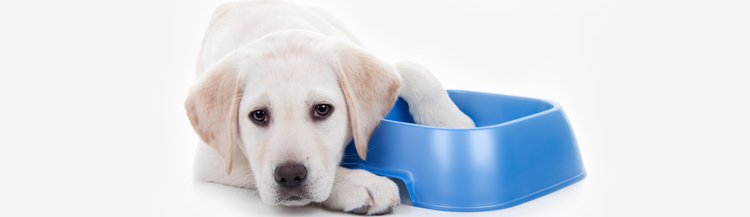 Сколько сухого корма нужно давать щенку в день?