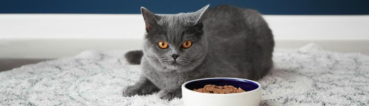 Можно ли кормить кота только сухим кормом?