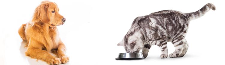 Можно ли котам собачий сухой корм?