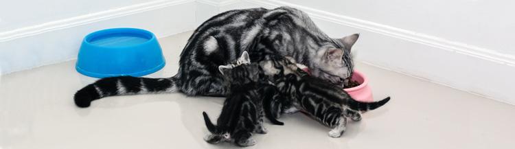 Можно ли котёнку взрослый сухой корм?