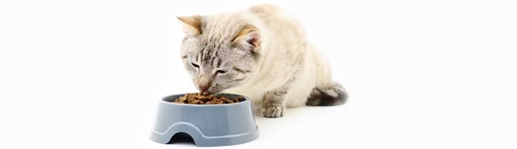 Сколько корма нужно кошке в месяц