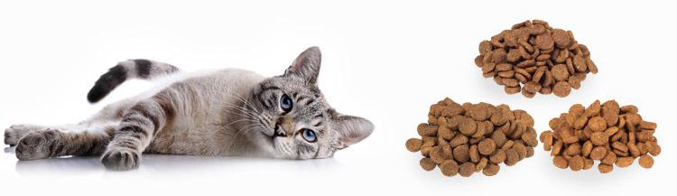 Сравнение сухих кормов для кошек по составу