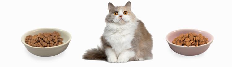 Чем отличаются корма для кошек?