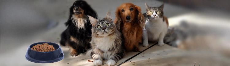 Отличие корма для кошек и собак