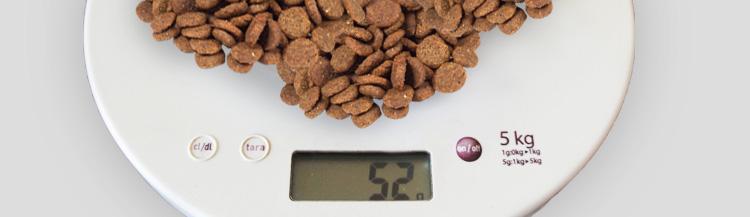 Каков оптимальный вес корма для кошек?