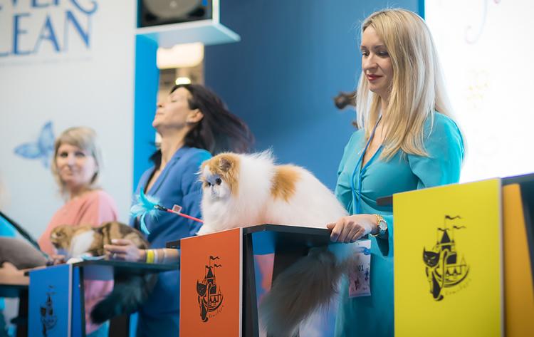 Выставка кошек Кэтсбург 2019